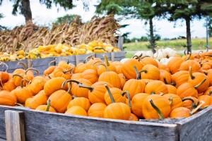 Cris Johnson Pumpkins